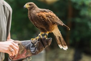 borris-house-country-pursuits-birds