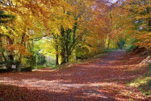 borris-house-farming-and-woodland